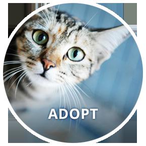 Button_Adopt