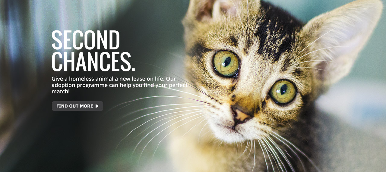 Adopt Cat Free Malaysia