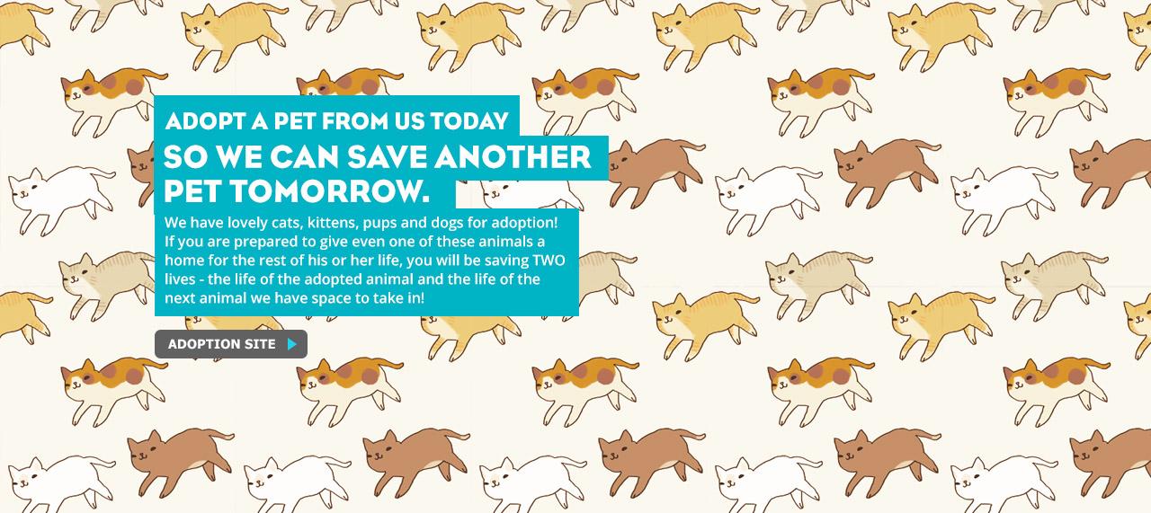 SPCA Selangor Adoption