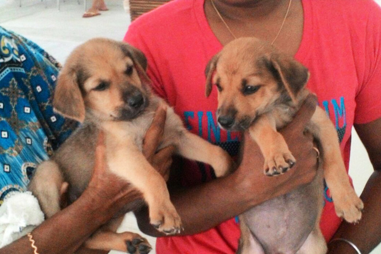 31July2015_Puppies