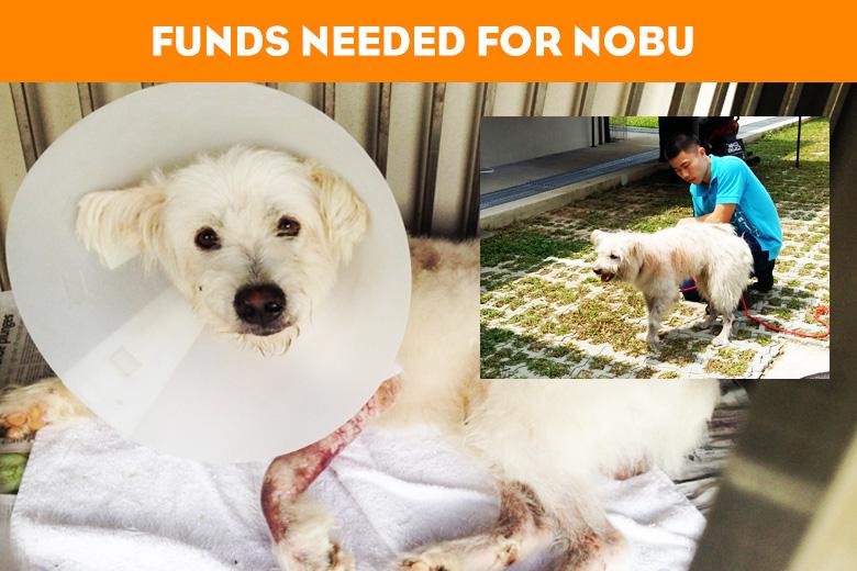 Nobu_News
