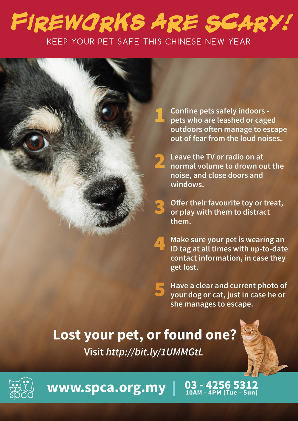 The Day I Lost My Pet Dog