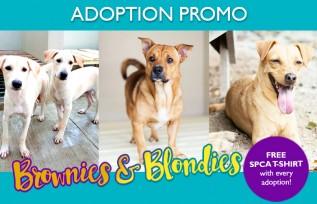 Brownies & Blondies Adoption Promo