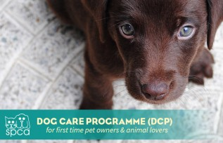 NEW: Dog Care Programme (DCP)