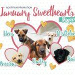 sweethearts_news
