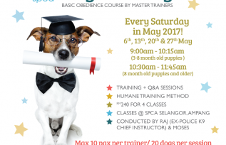 4-week basic obedience course for dogs
