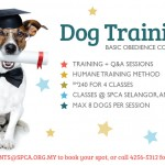 DogTraining_News