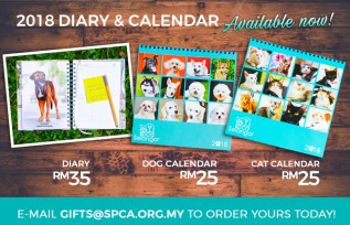 2018 Diary & Calendars Available Now!