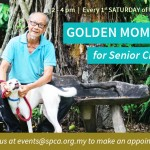 GoldenMoments_News