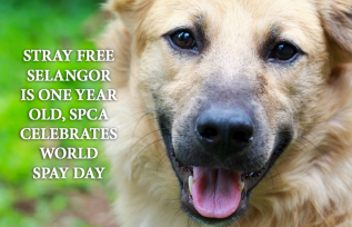 Stray Free Selangor Is One Year Old, SPCA Celebrates World Spay Day