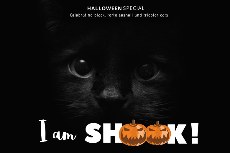 Halloween Adoption Special!