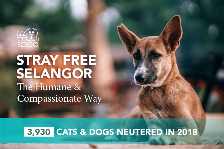 3,930 Cats & Dogs Neutered in 2018!