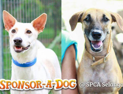 Sponsor-A-Dog @ SPCA Selangor for RM90!