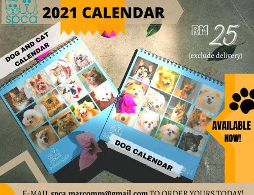 SPCA 2021 Calendars Available!