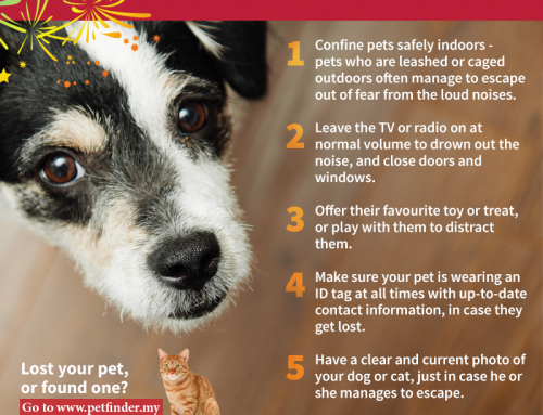 Fireworks Are Scary – Keep Your Pet Safe This CNY!