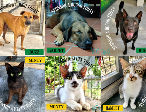 Sponsor A Pet For Father's Day