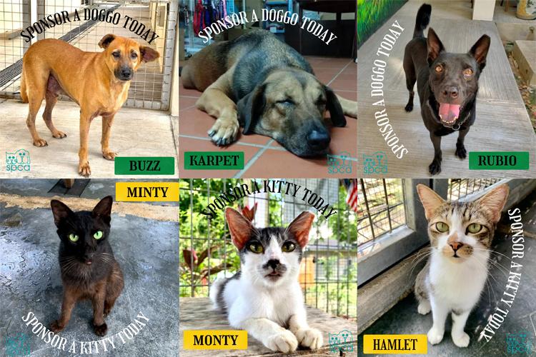 SPCA Selangor – SPCA