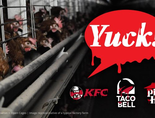 Petition to Yum Brands: Switch to cage-free eggs!