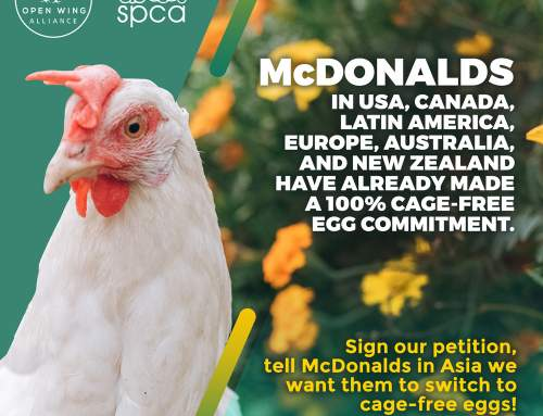 Tell McDonalds In Asia We Want Them to Switch To Cage-Free Eggs!